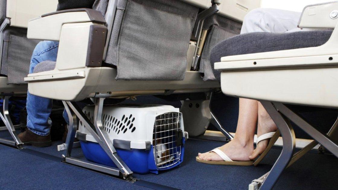 Перевозка животного в салоне самолета